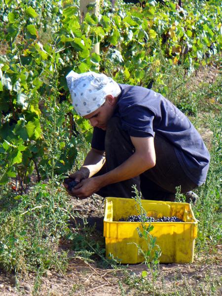 Frwblog_harvest02